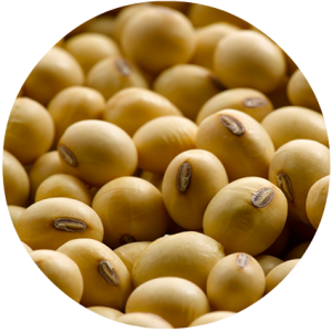 Soybeans-Circle